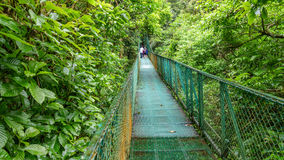 Green hanging bridge in Rainforest of Monteverde Royalty Free Stock Images