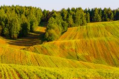 Green harvest fields near mixed forest stock photography