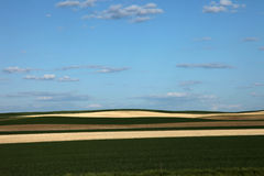 Green and harvested wheat fields Royalty Free Stock Images