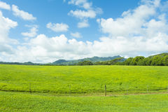 Green Hawaiian pastures Royalty Free Stock Photos
