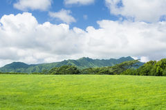 Green Hawaiian pastures Stock Photo