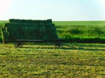Green hay bales on a cart, southeastern Pennsylvania stock images