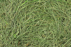 Green hay Royalty Free Stock Image