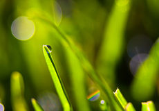 Green Haze. Nature macro photograph taken of a water drop l Stock Photography