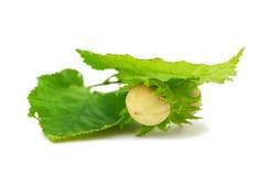 Green hazel nut Stock Photo