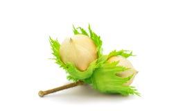 Green hazel nut Royalty Free Stock Photography