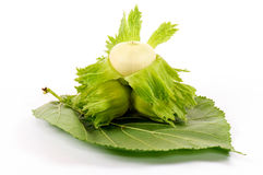 Green hazelnut Royalty Free Stock Images
