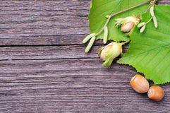 Green hazelnuts and tree leafs Royalty Free Stock Photo