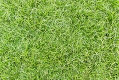 Green healthy grass Stock Photos