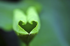 Green heart. A green leaf with the shape of a heart Royalty Free Stock Photos