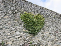 Green heart. On the stone wall Royalty Free Stock Images