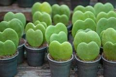 Green heart. Concept. green environment Stock Photography