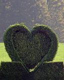 Green heart from conifer. In the countryside of the Netherlands Royalty Free Stock Photos