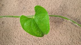 Green heart. Leaf on the sand Stock Images