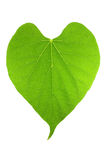 Green heart leaf shape Royalty Free Stock Image