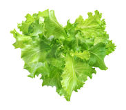 Green heart lettuce isolated. Green heart lettuce white background Royalty Free Stock Photos
