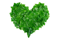 Green heart made of ivy leaves on white background. Natural organic concep Stock Photography