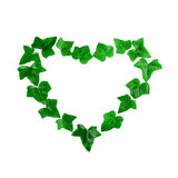 Green heart pattern made of ivy leaves on white background. Flat lay Royalty Free Stock Image