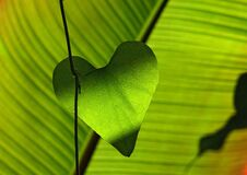 Green Heart Shape Leaf Royalty Free Stock Image