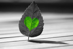Green heart-shaped on leaf. Black-and-white photograph Royalty Free Stock Image