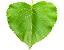 Green heart shaped leaf. On white Royalty Free Stock Image