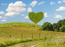 green heart-shaped tree Stock Photos