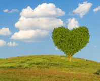 Green heart-shaped tree on a spring meadow. Blue sky Royalty Free Stock Photos