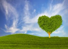 Green heart-shaped tree on a spring meadow. Blue sky Royalty Free Stock Photo