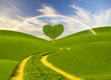 Green heart-shaped tree on a spring meadow,rainbow Stock Photography