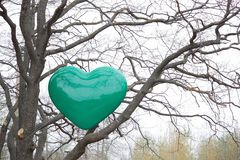 Green heart on a tree Stock Photos