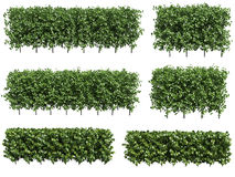 Green hedge Stock Image