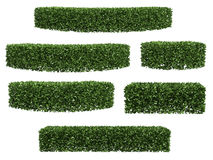 Green hedge vector illustration