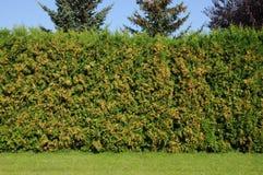 Green hedge Stock Photo