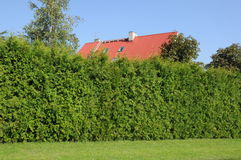 Green hedge Royalty Free Stock Photos