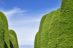 Green Hedge Aisle Royalty Free Stock Photos