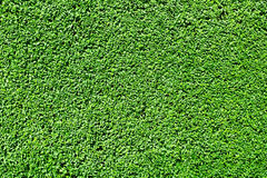 Hedge background Royalty Free Stock Photos