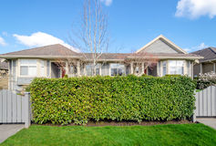 Green hedge fence with two houses in the background Stock Photos