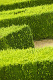 Green hedge flowerbed Stock Image