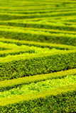 Green hedge labyrinth in french garden Stock Image