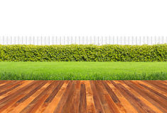 Green hedge. Lawn and wooden floor with hedge and White fence isolated Royalty Free Stock Photo