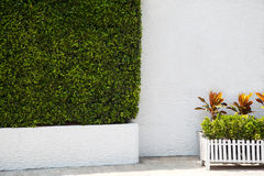 Green hedge and potted plants next to a white wall in a park. Landscaping garden Royalty Free Stock Photo