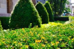 Green hedge Royalty Free Stock Images