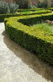 Green Hedges In Park. Outside Royalty Free Stock Photo