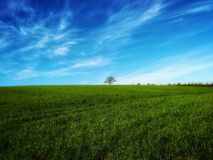 # #green hemel#nature # tree#-het gras stock foto