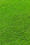 Green herb background stock images