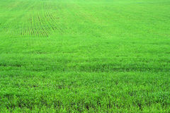 Green herb grass field Royalty Free Stock Images
