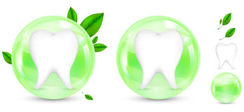 Green herb protection tooth Royalty Free Stock Image