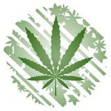 Green herbal. Vector draw of symbol marijuana leaf Royalty Free Stock Image