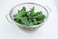 Green herbal mix of mint and melissa in strainer bowl. Green herbal mix of fresh mint and melissa herbs in stainless metal strainer bowl on white wooden royalty free stock photo