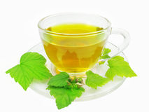 Green herbal tea with currant extract Stock Images